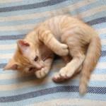 【探しています】家で飼っていた可愛い子猫がいなくなりました