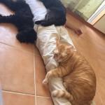 沖縄 猫 可愛い