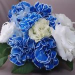 青いカーネーション、画像